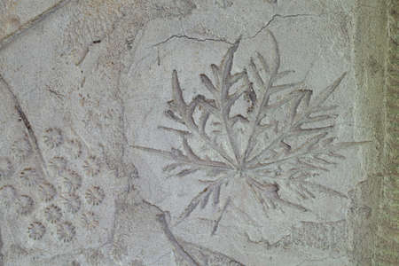 Leaf detail texture on cement wall  photo