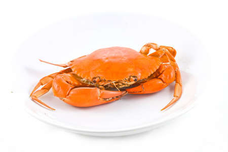 sea Crab on isolate photo