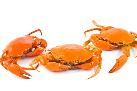 blue swimmer crab: sea Crab on isolate