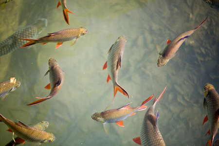 fish in water top view