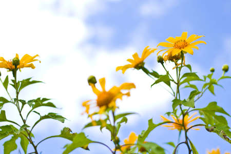 yellow flower with blue sky  photo