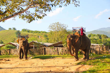 Two Asia elephants in park  photo