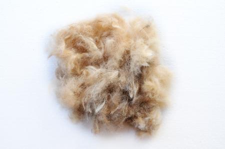 grooming: grooming dog hair