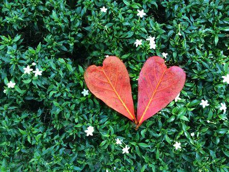 alfresco: heart leaf on green grass for valentine love