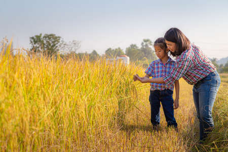 The farmer mother and her daughter admired the golden-yellow rice fields that are ready to harvest. Agricultural and farmers' family concept.