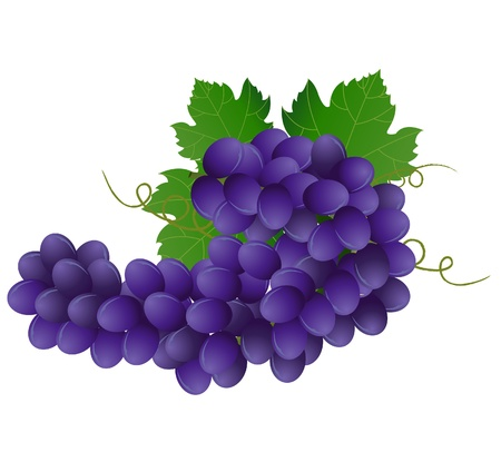 clip art wine: image of violet grape with green leaves