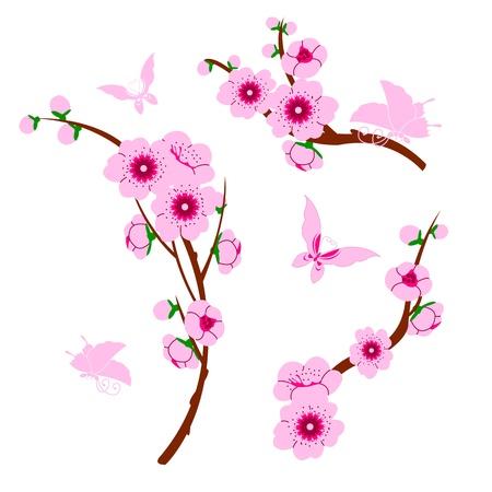 flor de durazno: Vector de imagen de los elementos de sakura y mariposas Vectores