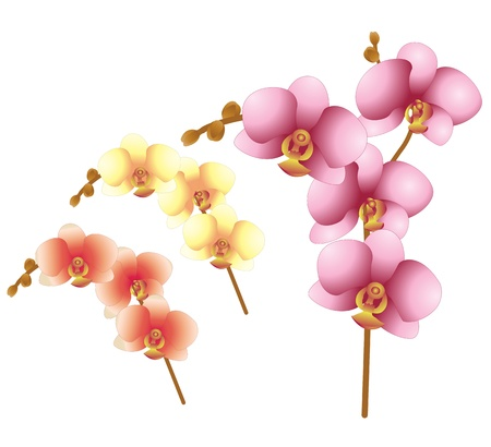 Vector of orchid flowers on white Vector