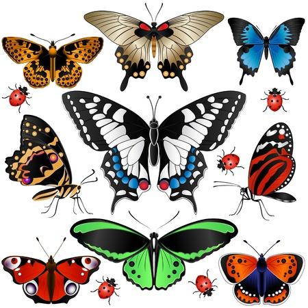 多くの蝶やてんとう虫コレクションのベクトル