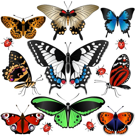 descriptive: Vector of Collection of many butterflies and ladybugs Illustration