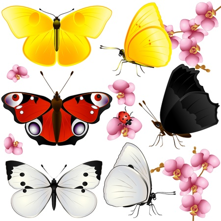 Collection of butterflies with open wings and from one side Vector