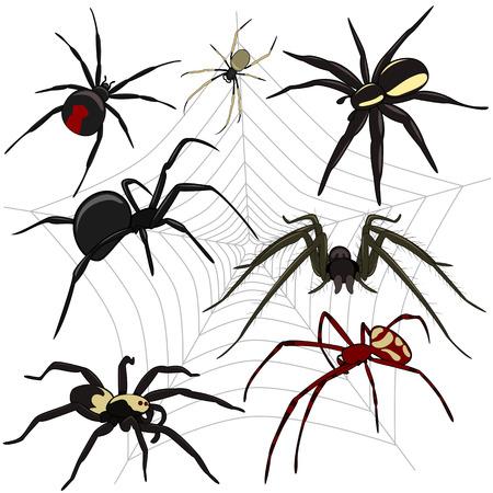 白い背景の設定のクモのベクトル