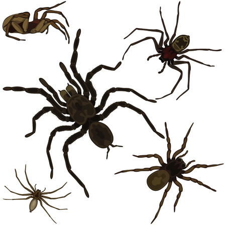 cartoon insect: Vector of spiders set on white background