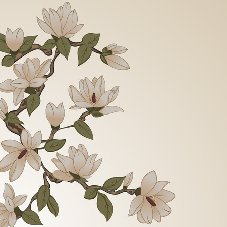 flower designs: Vector background with magnolia flowers on branch Illustration