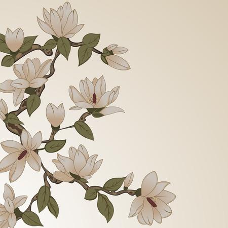 jardines con flores: Vector de fondo con flores de magnolia en la ramificaci�n