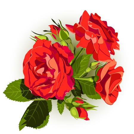 vintage rose: Vector of vintage roses on the white background. Beautiful floral design element Illustration