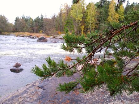 Photo of mountain river with rapids in Finland, golden autumn