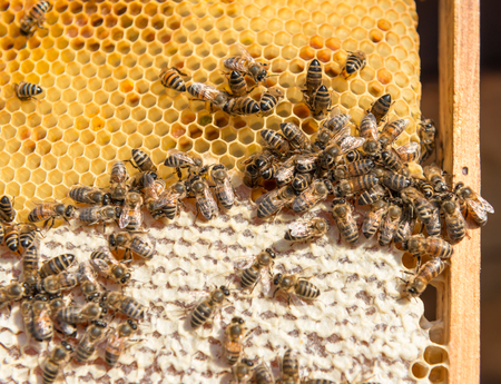 Busy bees producing honey Imagens