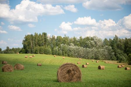 hayroll: Bales of hay in a field