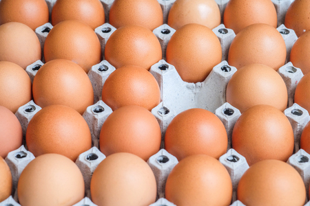 Eieren, een lege ruimte Stockfoto
