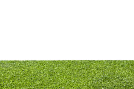 lawn grass: Green grass isolated on white background