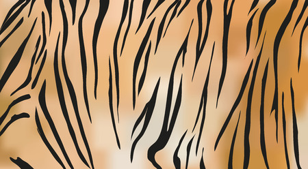 fur: Tiger fur texture Illustration