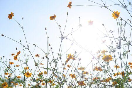 Orange flowers with blue sky background