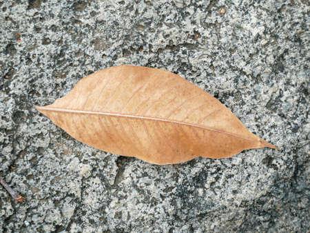 Dry leaves on the rock 版權商用圖片