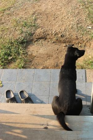 spiritless: Black dog   shoes