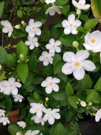 white: White flowers Stock Photo