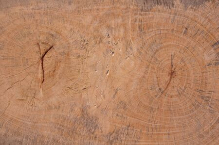 Texture of wood Stock Photo - 8689658