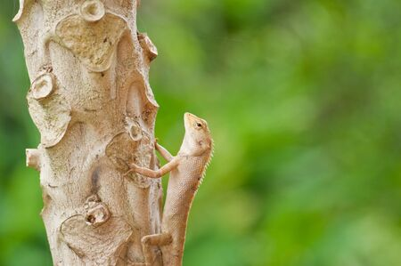 Lizard on the three