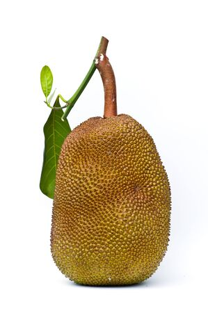 jackfrui  isolate on white background