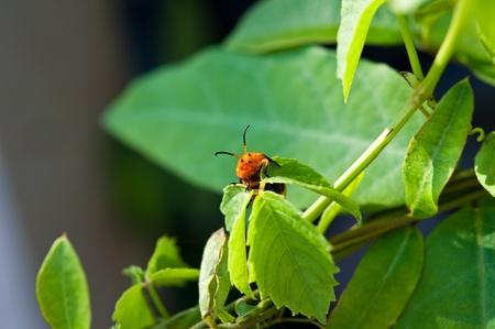 small bug on leaf