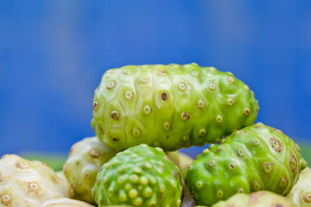 noni fruit,Thailand