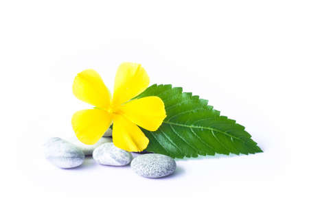 yellow flower with green leaf on the gravel Stock Photo - 10319905