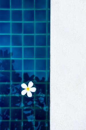 white plumeria floating on the swimming pool Stock Photo