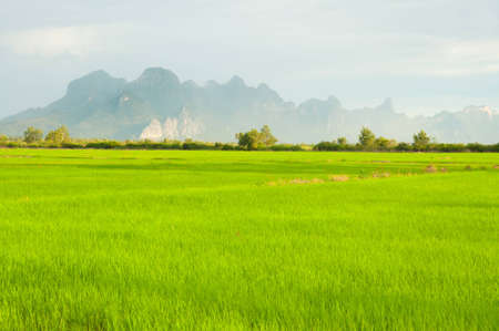 rice farm with mountain behide Stock Photo - 10543903