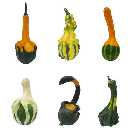 cucurbita: six colorful gourd on white background