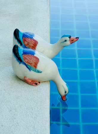 two of ceramic duck on swimming pool edge Stock Photo - 11709167