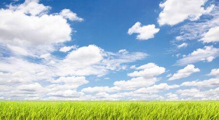 firmament: sky and grassland