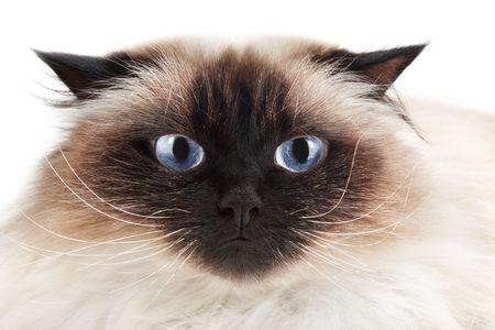 Cat isolated on white background Stock Photo - 6565763