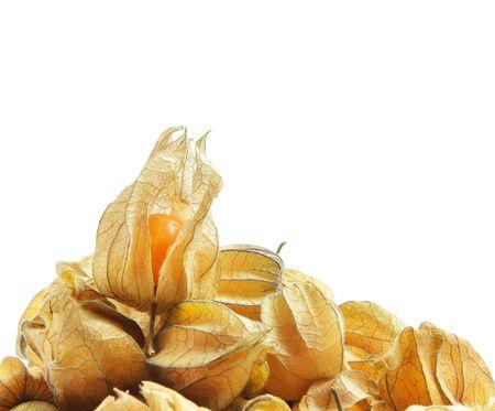 physalis: Physalis frutas sobre fondo blanco  Foto de archivo