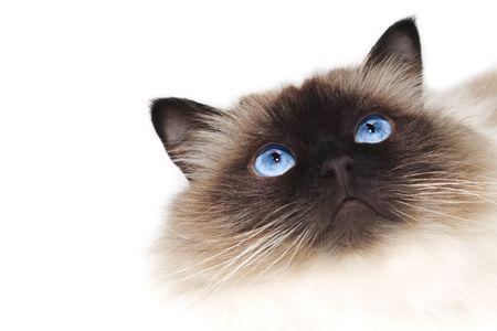 funny cat: Cat