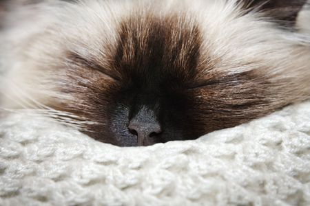 drowse: Close-up of sleeping cat