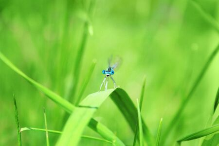 imago: Dragonfly on a blade of grass