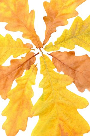 Dry oak leaves background texture Stock Photo - 6609679