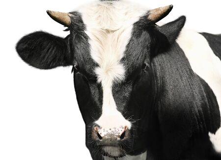 bulls eye: Bull