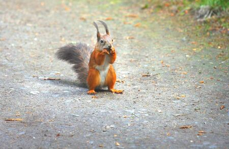 carroty: Squirrel