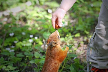 Kids hand feeding squirrel. photo